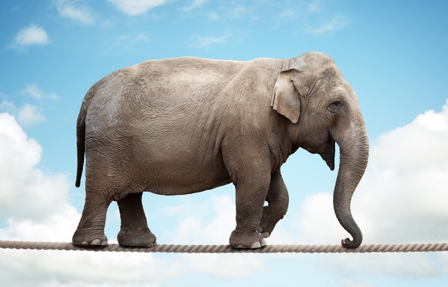Elephant-learning-a-new-skill