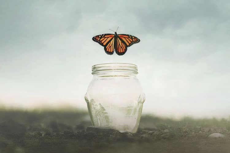 Butterfly emerging from jar inspiration concept for political branding